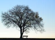 """Jazz'da """"Yalnızlık""""..."""
